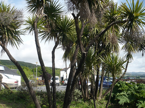 palm trees on jura
